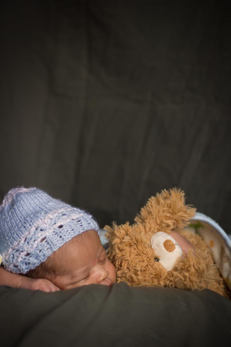bearsleep2