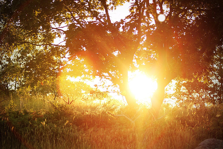sunning tree2