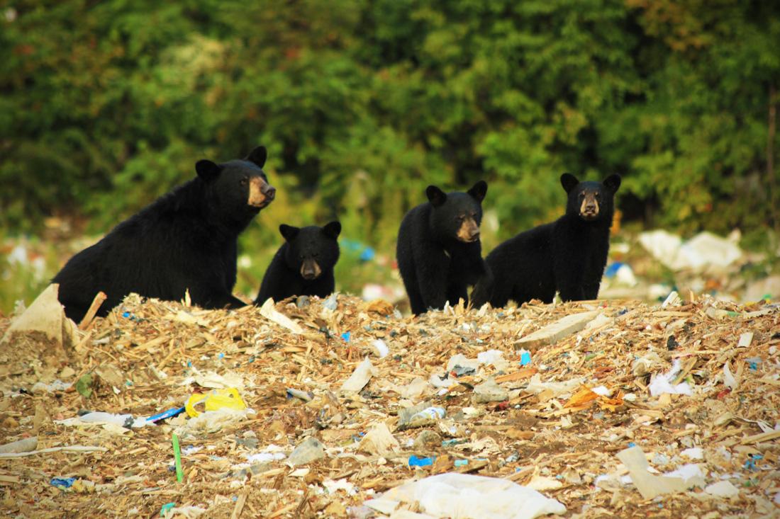Bear Family-12