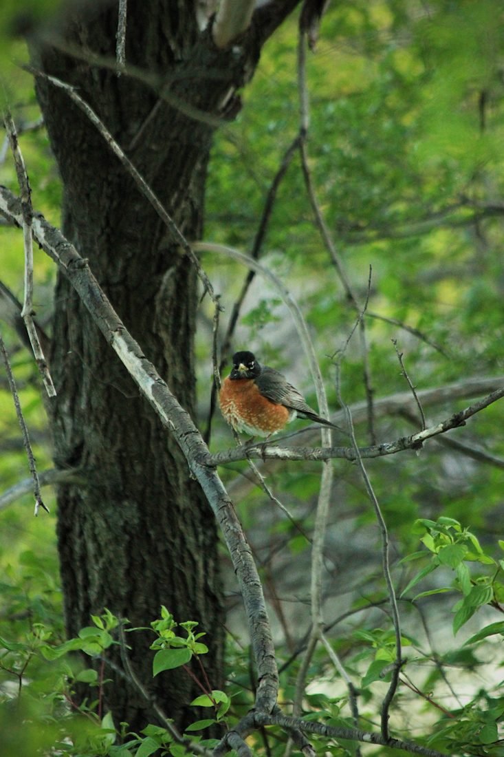 birdie2-50