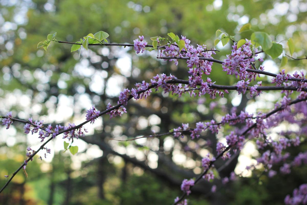 blossom22