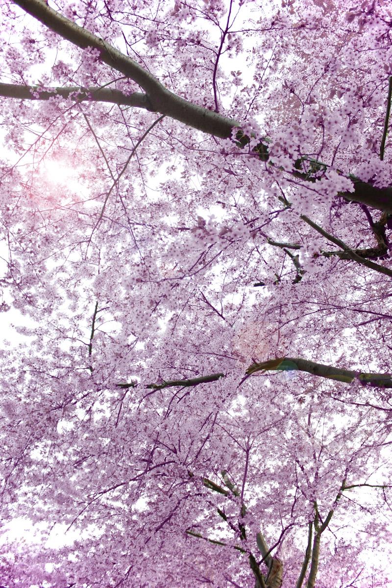 blossomgalore