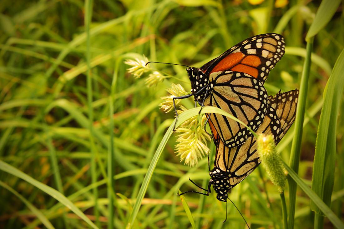 butterfly1-3