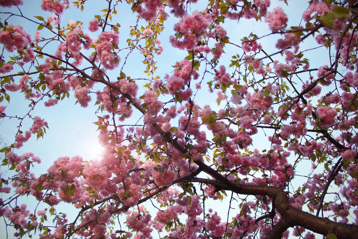 cherrytree2