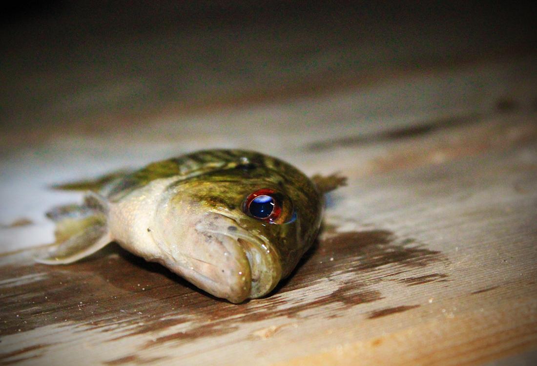 fish-26
