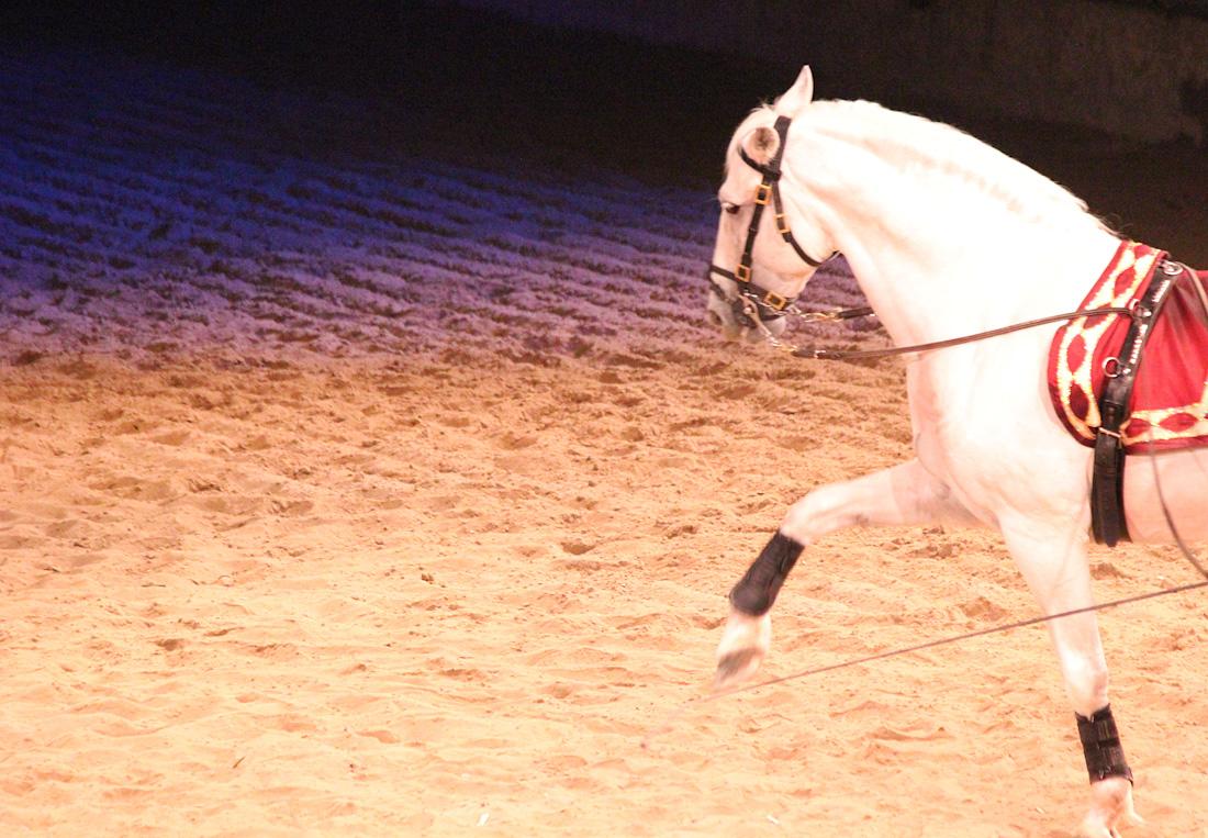 horse-32