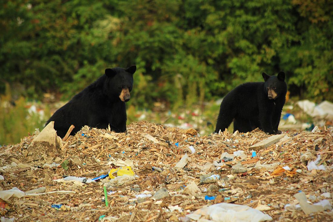 two bears2-13