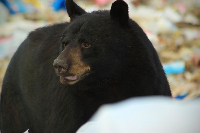 Bear-20