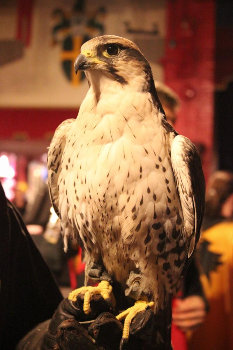 eagle-33