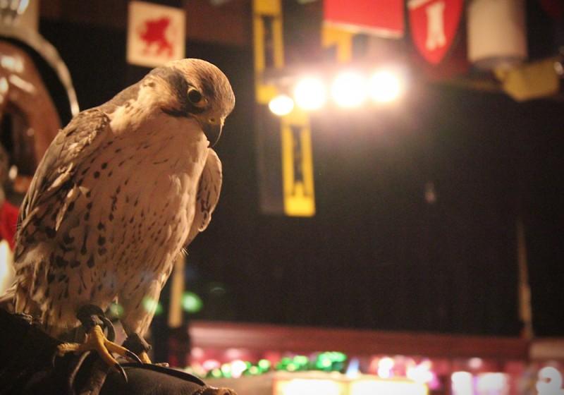eagle2-34